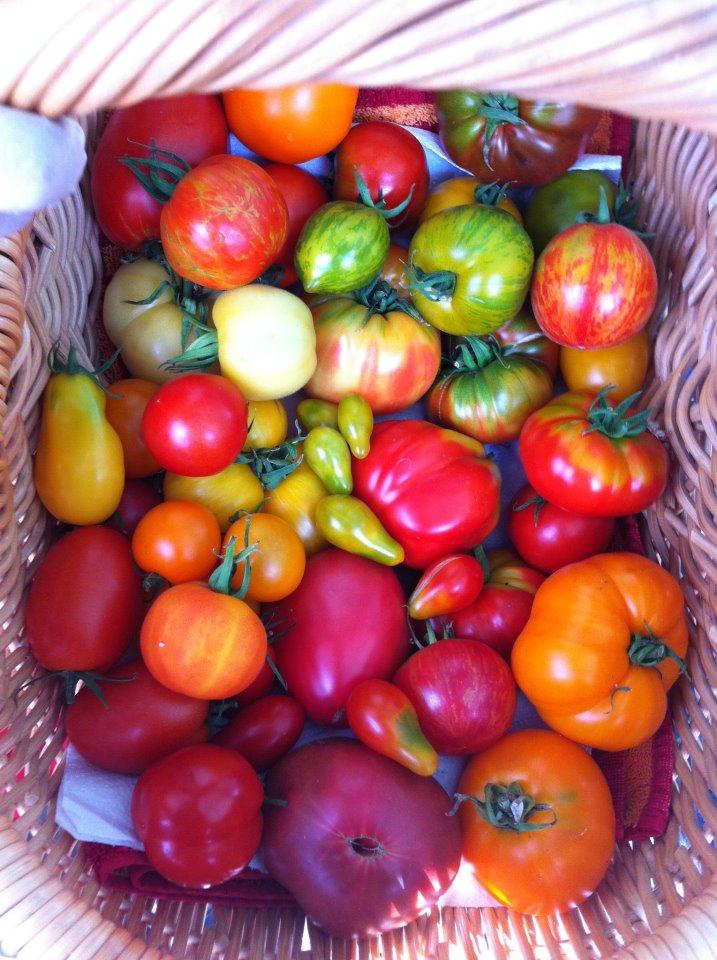 Alles Tomate? Wie viele SOrten kennst fdu?